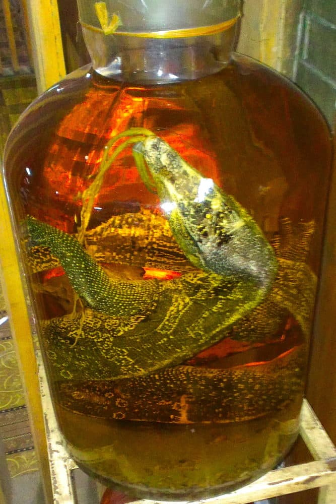 A goanna in a large glass jar of rice wine