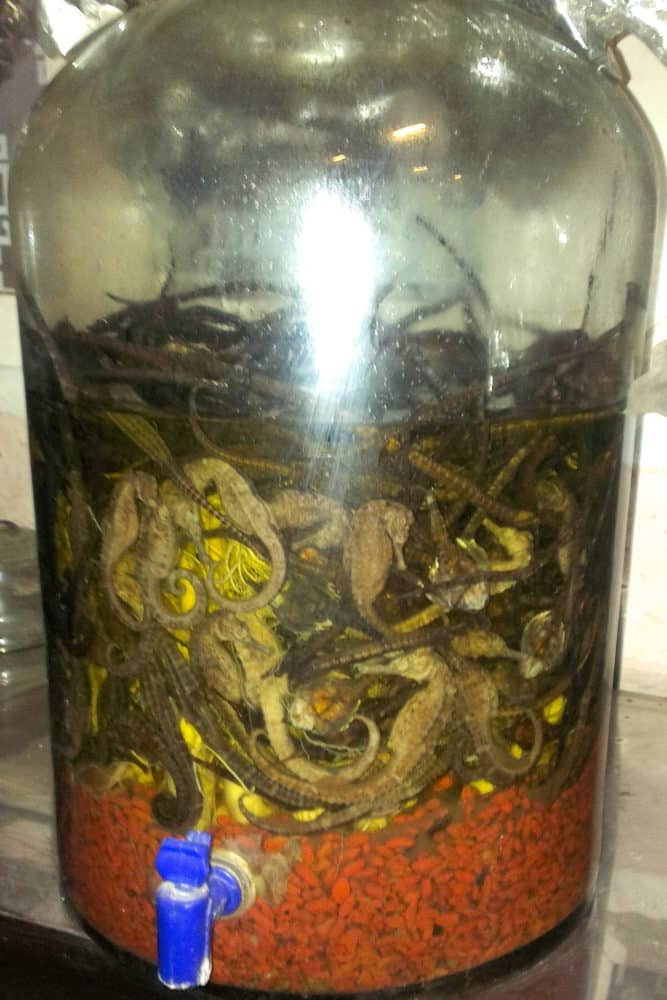 Sea horses in a glass jar of rice wine