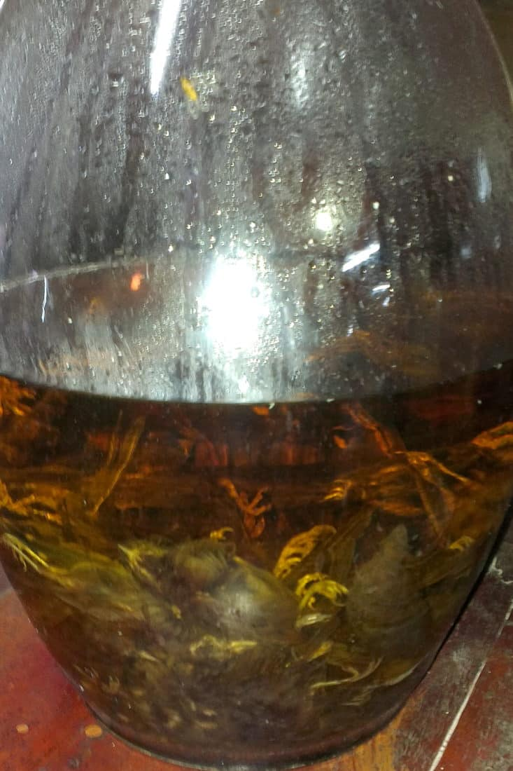 Sparrows in a large glass jar of rice wine