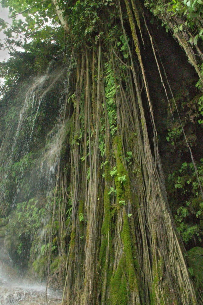long thin vines hanging down from a limestone waterfall
