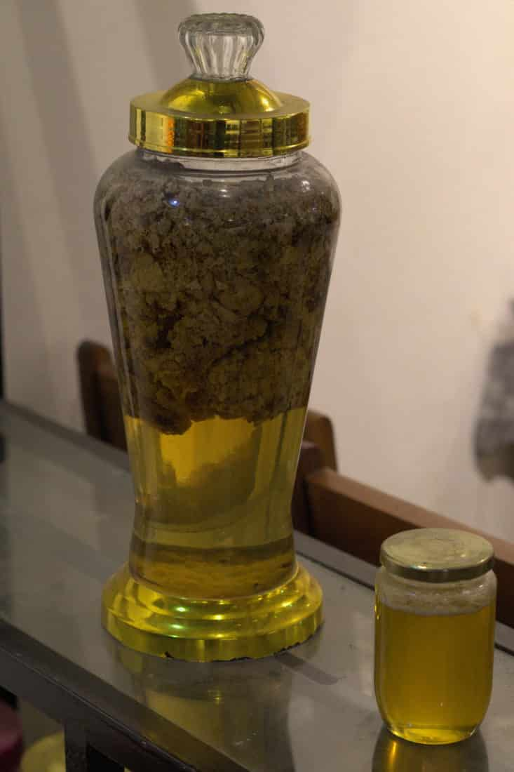 A wikd beehive fermenting in a large glass jar of rice wine