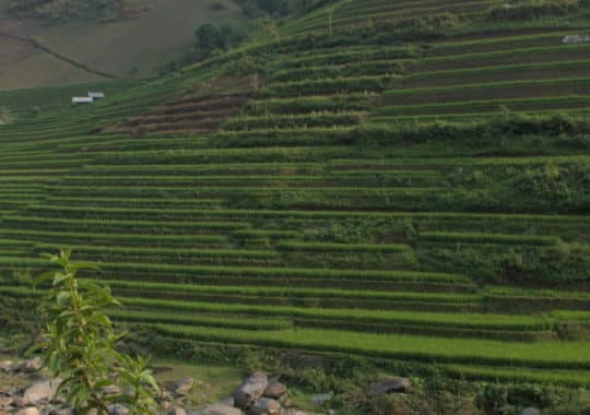 Mù Cang Chải – Land of Rice Terraces