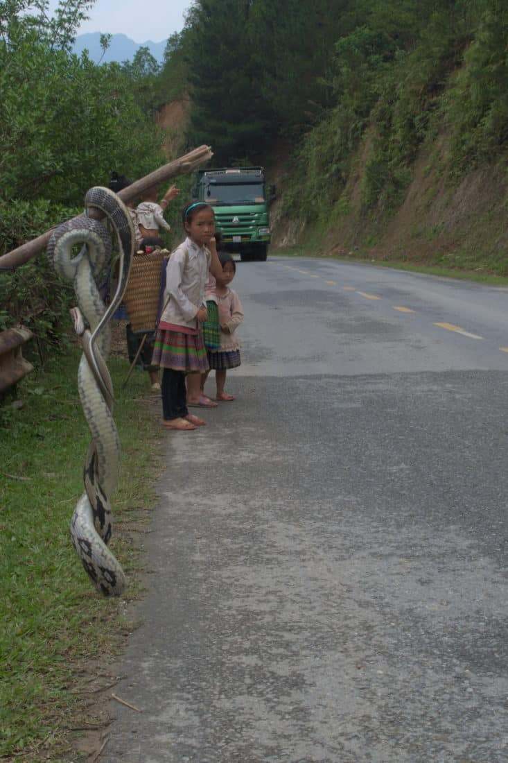 Snake for sale on the side of the road of Khau Pha Pass