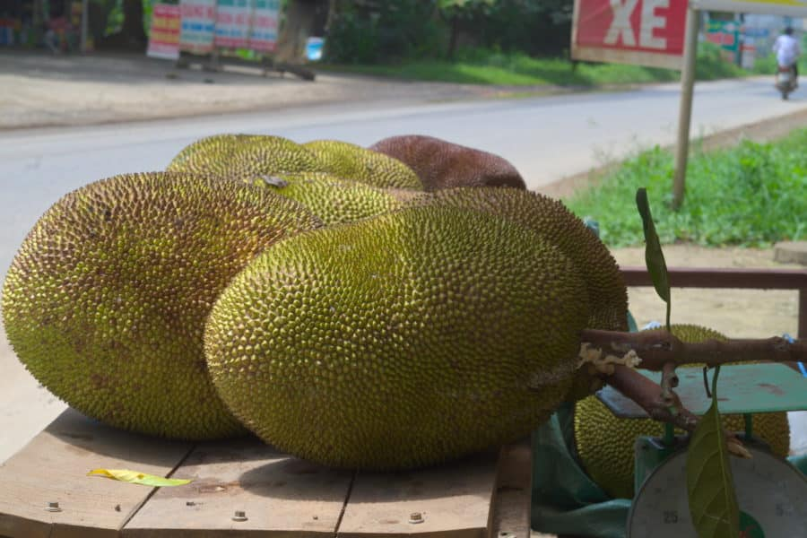 Large green jackfruit for sale on a wooden table at the side of a road