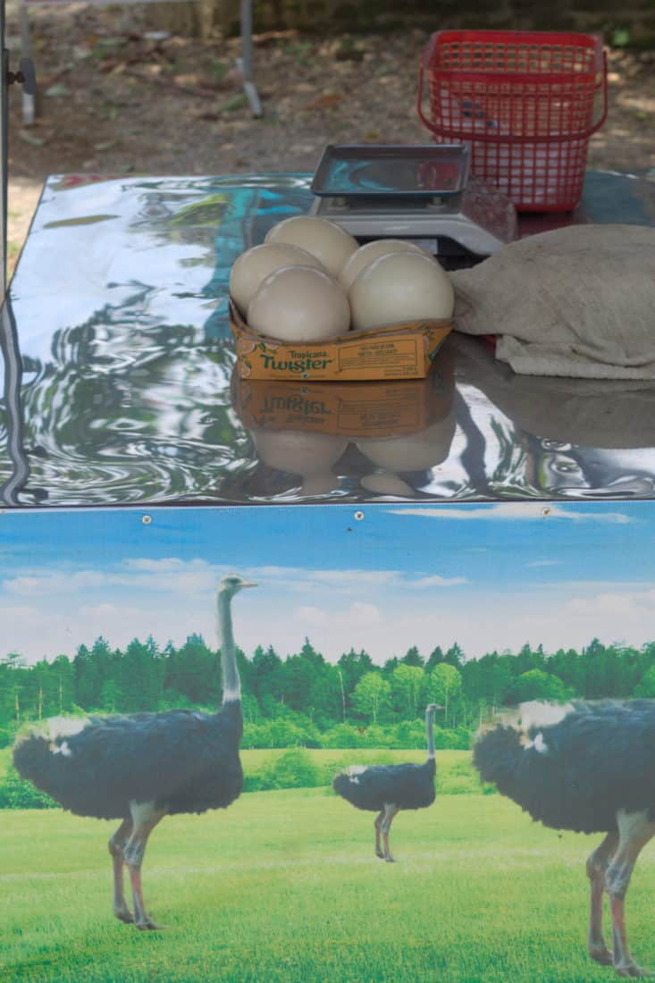 Big ostrich eggs in a basket on a metal table