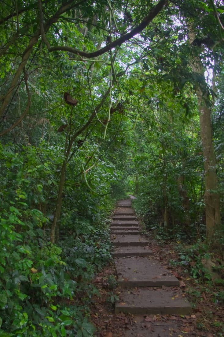 A hiking trail to Silver Cloud Peak in Cuc Phuong National Park, Vietnam