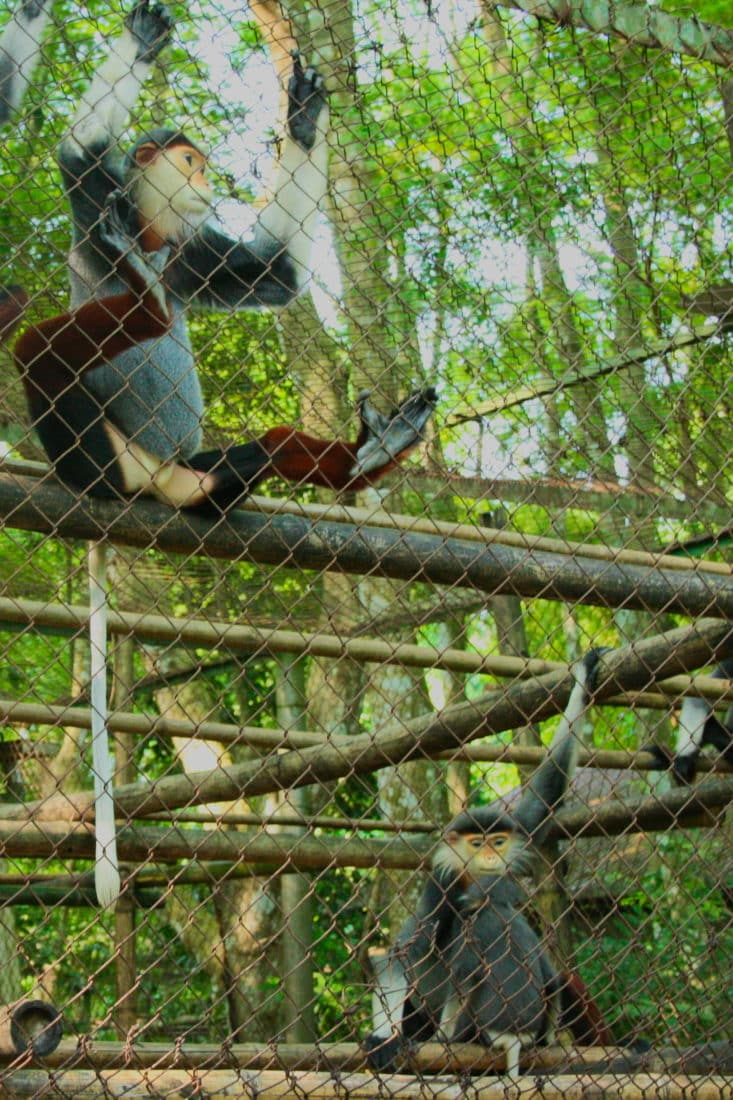Monkeys at the Primate rescue center in Cuc Phuong National Park