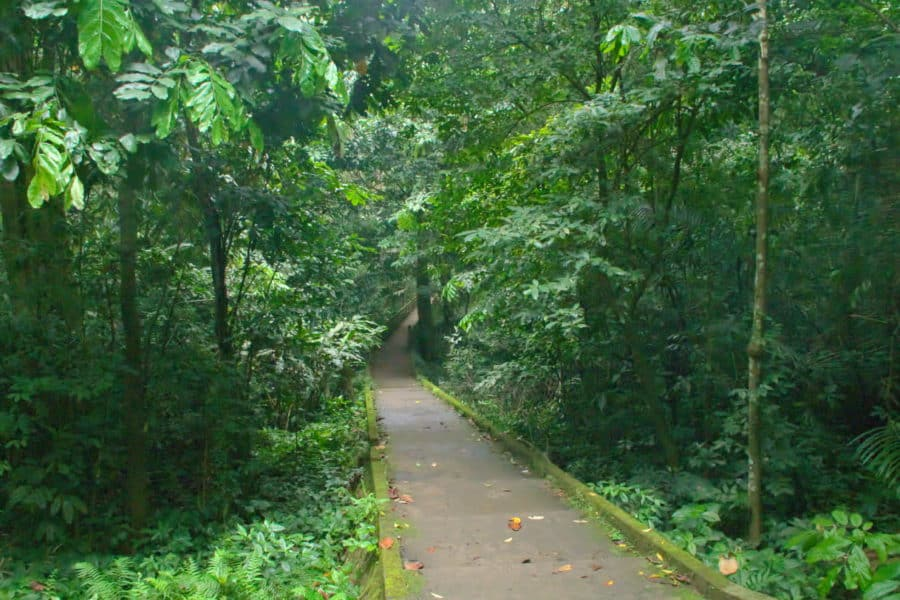 Jungle path to cave of the Prehistoric man in Cuc Phuong National Park