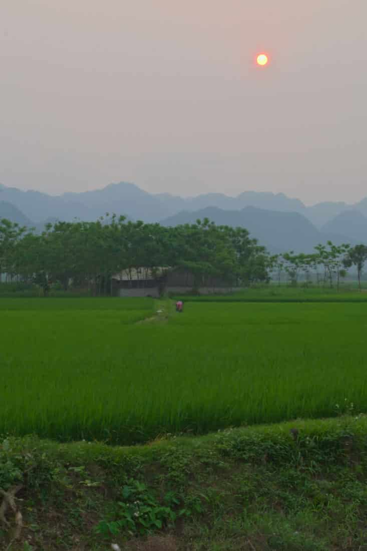 A rice farm with Cuc Phuong National Park in the distance at sunset