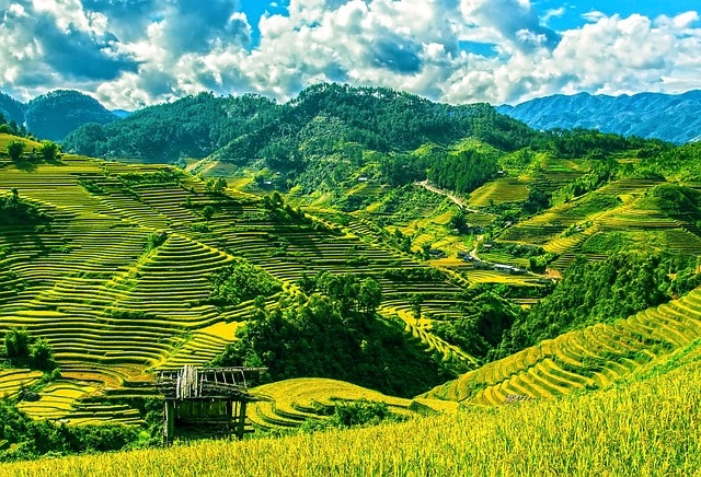 Rice terraces of Mu Cang Chai on a Motorcycle tour