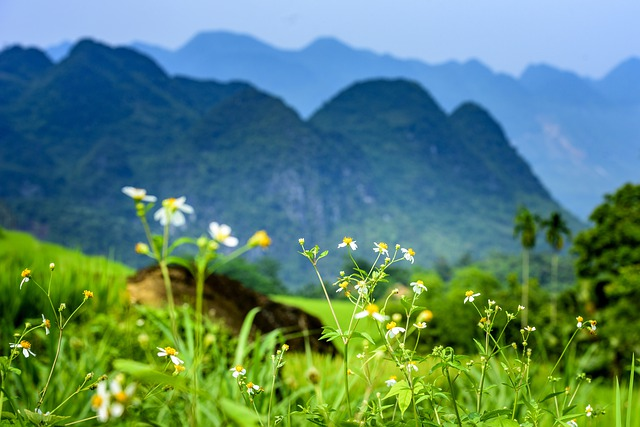 flowers in the mountains of Pu Luong nature reserve, Vietnam