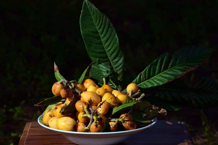 A bowl of medlar fruit grown in Vietnam