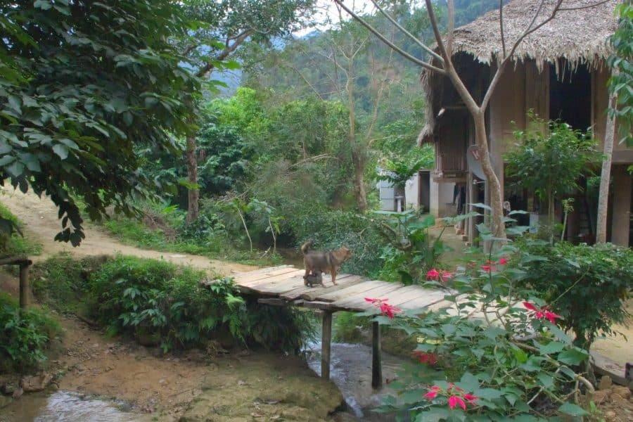 Dogs on a wooden bridge in a jungle village in Vietnam