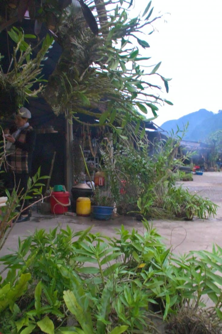 orchids and other plants for sale at a Vietnamese mountain pass