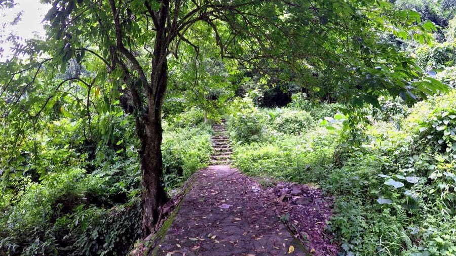 A cobbled path in the jungle next to a shadowing tree