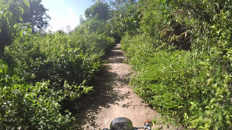 A narrow very road surrounded by bushes in north Vietnam
